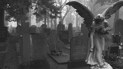 Pierwszy zbiorowy pogrzeb nienarodzonych w Polsce - miniaturka