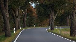 Niebezpieczne drzewa przy drogach - miniaturka