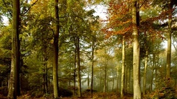 Lasy za kamienice - OK! Ale niemieckie lasy! - miniaturka