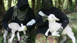 """Obrońcy """"praw"""" zwierząt grożą, że otrują małe dzieci! - miniaturka"""
