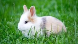 """""""Jesteśmy królikami. Niestety królikami urodzonymi w ciałach ludzi"""", czyli jak w dwie minuty ośmieszyć gender - miniaturka"""