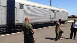 Rosyjscy terroryści zachowują się jak zwierzęta - miniaturka
