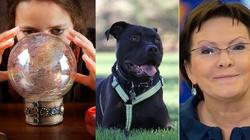 Morawiecki: Kopacz wydała na horoskopy dla psów 460 tys - miniaturka