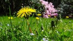 Chwalcie łąki umajone... - miniaturka