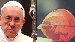 Papież mocno: Ludzkie życie od poczęcia do naturalnego kresu jest nienaruszalne! - miniaturka
