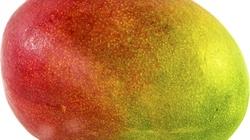 Poznaj właściwości owocu mango. To BOMBA zdrowotna - miniaturka