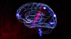 Koronawirus uszkadza mózg. Najnowsze badania - miniaturka