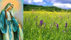 Chwalcie łąki umajone... Maj, miesiąc Maryi! - miniaturka