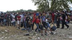 Imigrantom się słusznie należy!!! - miniaturka