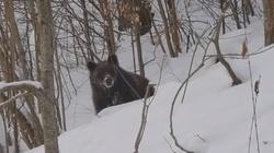 Grzesio czy Lesio? Rozmowa leśniczego z niedźwiedziem podbija internet (WIDEO) - miniaturka