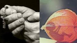 Duchowa adopcja jednoczy wspólnotę - miniaturka