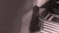 [Wideo] Dewastacja krakowskiego biura PiS. ,,Co będzie następne? Nóż?'' - miniaturka