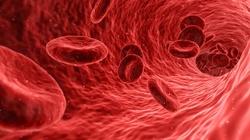 Koniecznie zbadaj krew. Morfologia to tajemnica twojego zdrowia - miniaturka