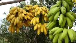 Zwykły banan... a może tyle, że złapiesz się za głowę!!! - miniaturka