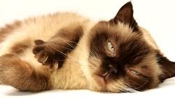 Obcinanie pazurków kotom jest ,,nieludzkie'', a zabijanie dzieci jest ok. Absurd w Nowym Jorku - miniaturka