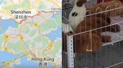 Chiny. zakaz jedzenia psów i kotów wprowadza Shenzhen - miniaturka