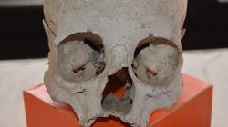 Wrocław: Remontowali tory, znaleźli trumny i ludzkie szczątki - miniaturka