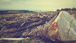 W Niemczech wycięto 30 tys. drzew! Świat milczy! Im wolno, a Polsce nie? - miniaturka
