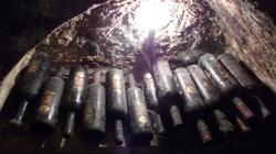 Stare wino posłuszeństwa - miniaturka
