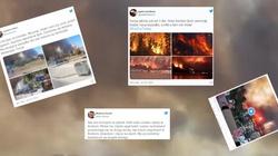 Apokaliptyczne obrazy w Turcji. Lasy stanęły w płomieniach, turyści uciekają z kurortów  - miniaturka