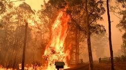 'Wyjedźcie natychmiast!' Plaga pożarów w Australii - miniaturka