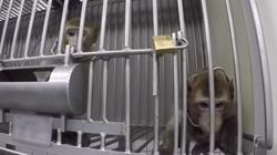 Niemiecki humanitaryzm? Tak cierpiały laboratoryjne zwierzęta! - miniaturka
