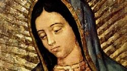 Matka Boża z Guadalupe. ,,Tylko wiara może nam powiedzieć, że jedynym autorem tego obrazu jest sam Pan Bóg'' - miniaturka
