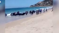 To ,,uchodźcy'' z Tunezji i Algierii zbiorowo gwałcili Polkę w Rimini! - miniaturka
