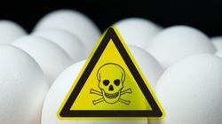 Jaja są zdrowe, o ile są polskie - miniaturka