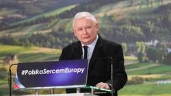 'Krowa Plus, Świnia Plus'- Kaczyński wyjaśnia, o co chodzi - miniaturka