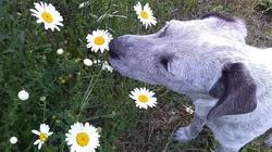 Pies Cię obwąchuje? Mógł wyczuć chorobę! - miniaturka