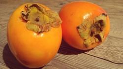 Owoc kaki - persymona - zabija komórki rakowe  - miniaturka