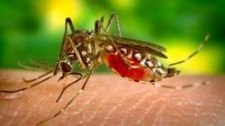 UWAGA! Plaga komarów nadciąga nad Polskę! - miniaturka