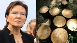 Za czasów PO wycięto w Polsce 120 mln drzew - miniaturka