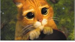 #ewa prosi, internauci odpowiadają!  - miniaturka
