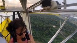 Latający kot odkryty przypadkiem - miniaturka