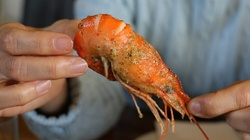 Owoce morza - to nie jest pokarm dla ludzi UWAGA!!! - miniaturka