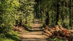 Zakaz wstępu do lasu zostanie zniesiony. Są jednak wyjątki... - miniaturka