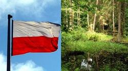 Polskie Lasy - wzór zdrowia i rozwoju! - miniaturka