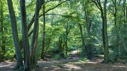 Koniec z wnioskami ws wycinki drzew? - miniaturka
