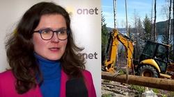 Gdańsk chce wycinać setki drzew nad morzem? Aktywiści alarmują - miniaturka