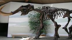 Terlikowska: Lewactwo jak mamuty, samo wyginie - miniaturka
