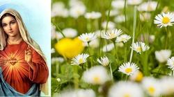 Chwalcie łąki umajone... Pieśń maryjna, która chwyta za serce! - miniaturka