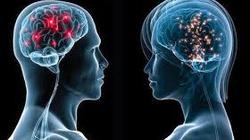 Czy można żyć bez mózgu? - miniaturka