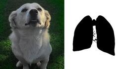 Psy mogą uratować życie chorych na raka płuc! - miniaturka