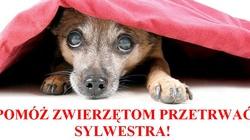 Marek Ast dla Fronda.pl: Czy Polska wprowadzi zakaz odpalania petard? - miniaturka