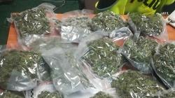 Cela Plus! Policjanci zabezpieczyli ponad 26 kilogramów marihuany - miniaturka