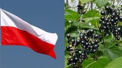 Grzesik: Polacy z Kraju i z całego Świata, do Broni!!! - miniaturka