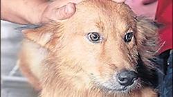 Pies uratował porzucone dziecko. Zobacz film! - miniaturka