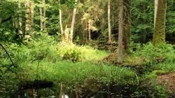 Dr Jerzy Kruszelnicki z COP24: Polska może i powinna zostać pionierem zalesiania kuli ziemskiej! - miniaturka